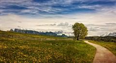 uno sguardo all'orizzonte... (clo dallas) Tags: trees italy mountain primavera berg montagne landscape outdoor wiese albero wald baum paesaggio pratofiorito steccionata