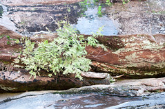 _DSC7428 (EricaJacobson) Tags: waterfall michigan okundekun nikond90