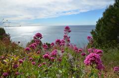 Mediterranean view (dfromonteil) Tags: flowers light sea sun mer fleurs soleil mediterranean view lumire vue mditerrane