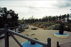 AUG8614 37 - Willow Pattern Garden (1)