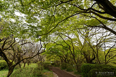 20160413-45-Kyoto Botanic Gardens (Roger T Wong) Tags: travel trees holiday japan kyoto canonef1740mmf4lusm botanicgardens 2016 canon1740f4l canoneos6d rogettwong