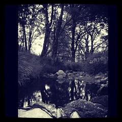 #stone#rever#forest#trees#ardeche#ardche#france#nb#bw#blackandwhite#cybershot#sony (danielrieu) Tags: trees blackandwhite bw france stone forest sony cybershot nb rever ardeche ard uploaded:by=flickstagram instagram:photo=230073249874225019186911192