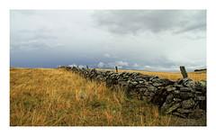 Aubrac (Yvan LEMEUR) Tags: landscape pluie nuages paysage extrieur orage ambiance randonne clture aubrac mtorologie muret lozre muretdepierressches