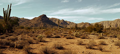 Desert Landscape (Michaela Johnson) Tags: travel cactus sky mountains nature landscape outdoors scenery desert saguaro cholla whitetank