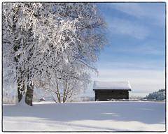 Gamle Hvam (2006) #3 (Krogen) Tags: winter history norway norge vinter norwegen nes akershus historie romerike krogen olympusc7070 gamlehvam