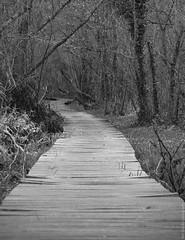 """my way"" (B.Graulus) Tags: blackandwhite bw nature monochrome forest photography belgium belgique noiretblanc outdoor path picture belgië natuur flanders vlaanderen herent"