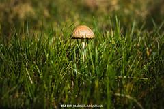 ::.: (ion markel argazkiak) Tags: nature mushroom natura fujifilm euskalherria basquecountry gipuzkoa adarra perretxiko xt1 naturadesenfokatua ionmarkelargazkiak