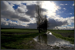 Puddle. (Picture post.) Tags: trees winter sunlight green nature water clouds landscape puddle interestingness eau track mud fields paysage arbre