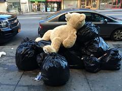 2016_01_03_bear-on-trash_5 (dsearls) Tags: bear christmas winter toy garbage manhattan broadway streetlife sidewalk teddybear 20160103