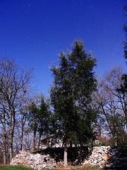 Arbre nocturne (wishima) Tags: sky night plante stars pierre ciel paysage mur campagne extrieur nuit nocturne toiles chene