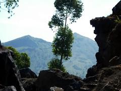 Landschaft in der Caldera; Batur, Bali, Indonesien (Chironius) Tags: trees bali tree indonesia rboles boom arbres rbol albero bume arbre rvore baum trd indonesien batur aa