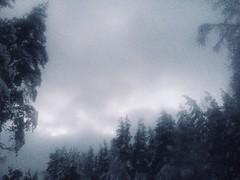 a year ago (1) (pardon-kobzon) Tags: winter forest russia saintpetersburg mystic entourage