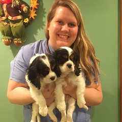 "Dr. Neuman with the pups at six weeks old. • <a style=""font-size:0.8em;"" href=""//www.flickr.com/photos/72564046@N04/24630193272/"" target=""_blank"">View on Flickr</a>"