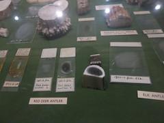 samples of ivory types (cleanskies) Tags: ivory pittriversmuseum