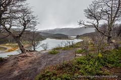 Laguna esmeralda - part 2 (Alberto Cassandro) Tags: trees patagonia mountains water argentina tierradelfuego ushuaia nationalpark nikon 2015 sigmalenses trendelfindelmundo d5200 reflexphotography albertocassandrophotography
