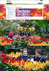 Kew Gardens Orchid Festival Opening Day on 6 February 2016 (01/66) - Poster (Kam Hong Leung.) Tags: park wood family winter brazil sculpture baby plant orchid tree london nature festival kew fauna garden lunch leaf kid spring pub flora child wine spirit wildlife father mother spouse son parent latin tropical hunter volunteer kam partner gardener rbg temperate horticulturist matheo greenhouse igpoty botanicgarden kewgardens glasshouse palmhouse bontanist orchidfestival brianpitcher rbgkew friendofkew patronofkew princessofwalesconservatory yourkew carlosmagdalena elisabiondi beatriceleung kamhongleung leungkamhong londonpark naturalneighbourhood royalbotanicgarden kewvolunteer genevievegravel coringolding annatack internationalgardenphotographeroftheyear thecricketers ladyslipper nashgallery