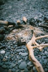 Bonfire Remnants (Rachael.Robinson) Tags: winter canada color film 35mm island fire sticks bonfire fujifilm after charred campobello