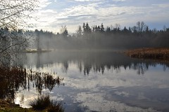 (careth@2012) Tags: trees sky mist lake reflection clouds skyscape landscape nikon scenery view britishcolumbia ngc relaxing scenic peaceful scene dreamy serene 1855mm tranquil naturepark greentimberspark greentimberslake d3100 nikond3100