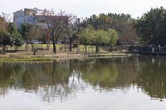 BM7Q4284.jpg (Idiot frog) Tags: park lake building tree water leaf outdoor bade lakeside taoyuan ecosystem