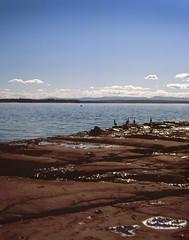 Shags and Dolphins - Jervis Bay (benjicon) Tags: bay pentax fujifilm provia canoscan 67 jervis silverfast
