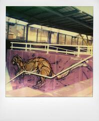 Dzia at Lembeek station (@necDOT) Tags: streetart polaroid sx70 graffiti dzia lembeek impossibleproject color600
