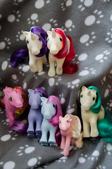 The family (~Loona~) Tags: blue toy soft message little blossom anniversary glory magic windy retro pony belle g1 ponies honeysuckle gusty flutter moondancer my so