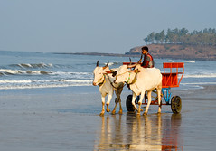 Cart Away... (chemistor) Tags: blue vacation india reflection beach wagon sand cart alibaug kashid