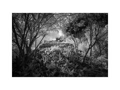 Kiuic II (Sandra Herber) Tags: mexico ruins maya yucatan mayan infrared kiuic
