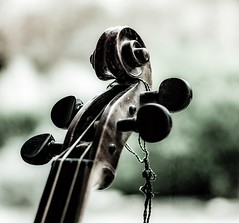 Inheritance (Barb120459) Tags: macro violin violine geige