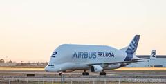 Airbus A300-600ST Beluga (Marcos_Vzquez) Tags: plane airport sevilla seville airbus beluga avin aeropuerto svq a300 600st