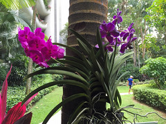 Img507191nx2 (veryamateurish) Tags: singapore shangrilahotel iphone6