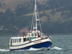 MV Monarch (geoffreyw@kinect.co.nz) Tags: wildlife monarch dunedin cruises mv