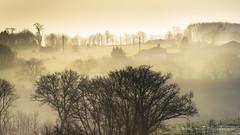 Dans la brume (Bertrand Thifaine) Tags: hiver campagne arbre brume matin aube mauges montrevault