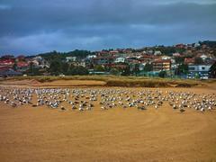 Praia Amrica 03 un da de lluvia (Pepe Fernndez) Tags: autumn mar paisaje nubes otoo olas gaviotas panxn nigrn playaamrica praiaamrica