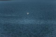 Gone Fishing (david_sharo) Tags: canon moraine t5i davidsharo