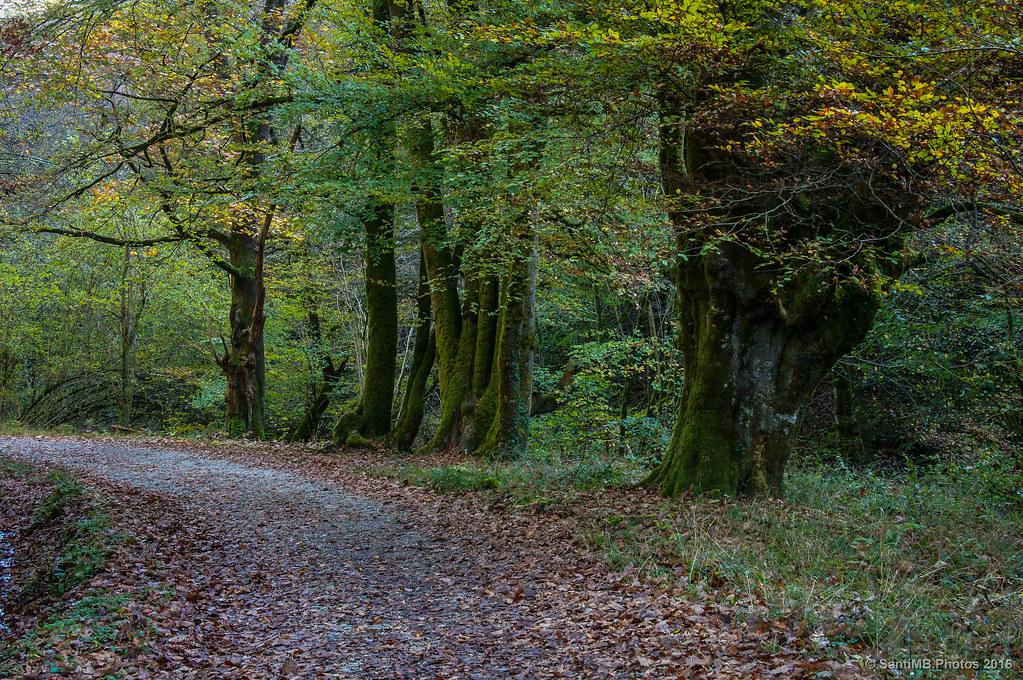 Los árboles de la curva