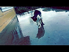 Some cats like water #pictureholic #new #youngphotographer #meandmycamera #followme #cats #rainydays (miyaprince) Tags: new followme meandmycamera youngphotographer pictureholic
