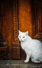 RIP (peter3400) Tags: pet cat sony sonyalpha 135f18 sonya850 sonyalphadslra850