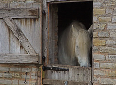 Half Hidden Horse (alphazeta) Tags: horse bricks stable maryardensfarmwilmcotenearstratforduponavonwarwickshire