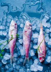 Salmonetes sobre hielo // Mullets on the rocks (Soniaif) Tags: blue fish ice azul pescado hielo mullets foodphotography salmonetes planocenital fotografaculinaria