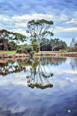 Reflection (Anna Hwatz Photography) Tags: lake reflection tree nature water landscape overcast perth westernaustralia clody harisonisland