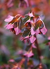 Spring 2016 - 806 LBG (Lostash) Tags: life flowers plants nature spring flora seasons