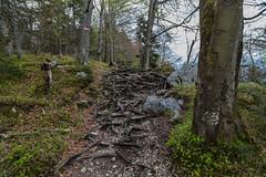Falkenstein Wanderwege  4745'30- N 1324'12- E (ernst.scherr) Tags: salzburg sterreich gemeindesanktwolfgangimsalzk gemeindesanktwolfgangimsalzkammergut