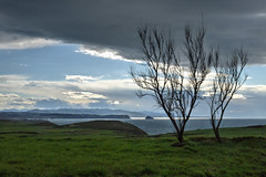 Prados de costa (ccc.39) Tags: costa marina contraluz rboles asturias paisaje nubes prados cantbrico gozn nuboso lejana