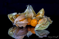 Physalis (toonarmy59) Tags: food plant green peru leaves yellow blackbackground fruit wow reflections physalis macromondays beginswiththeletterp