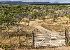 Serto de Crates (felipe sahd) Tags: brasil landscape paisagem cear nordeste semirido sertodecrates