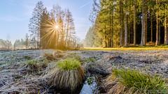 Lever de Soleil en fort (Emotions-photo.ch) Tags: sky water forest sunrise de soleil eau suisse ciel fribourg sunbeam herb fort ch sunray lever rayons herbe marsens marcage