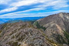 another freakin ridge walk (ma vie en rouge) Tags: newzealand scree marlborough thruhike arete teararoa mountrichmondforestpark mountrintoul