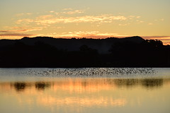 Bird cloud (Luke6876) Tags: sunset mountain reflection bird water animal dam wildlife swallow australianwildlife welcomeswallow