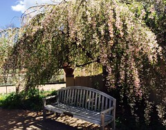 Mona Lisas and Mad Hatters (f l a m i n g o) Tags: pink musician music favorite tree bench spring song piano like denver eltonjohn shade botanicgardens monalisasandmadhatters 19091
